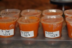 Homemade Baby Food Storage Guidelines