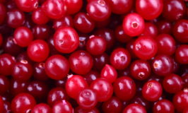 Cranberry Nutrition and Health Benefits